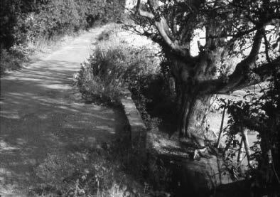 Barry Howard's Bishopswood Stream Memories